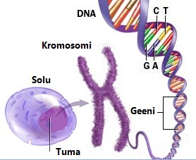 r22_chromosome