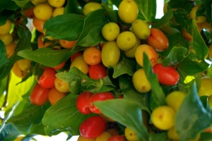 fruitful_tree