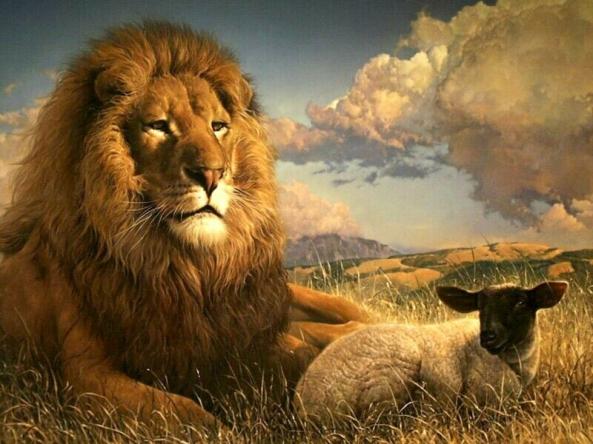 lion_sheep
